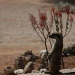 Meerkat Manor in the Kalahari Part 1 - 15