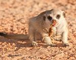Meerkat Manor in the Kalahari Part 1 - 6