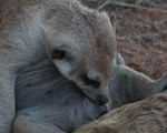 Meerkat Manor in the Kalahari Part 2 - 16