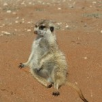 Meerkat Manor in the Kalahari Part 2 - 38