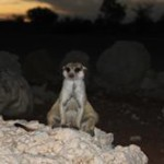 Meerkat Manor in the Kalahari Part 2 - 5