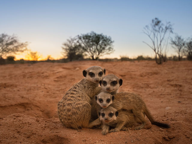 http://www.kalahari-trails.co.za/wp-content/uploads/2017/03/new-meerkats-slide-10.jpg